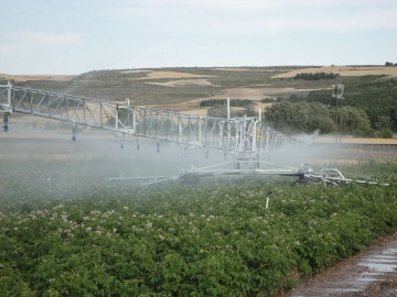 R64 2 potatoes in Spain 2
